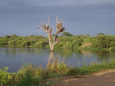 Waterhole game watch - Kruger Park