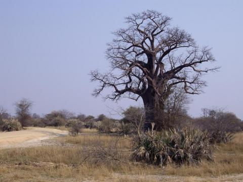 Caprivi landscape