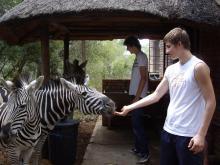 Zebra Encounter at Marloth Park